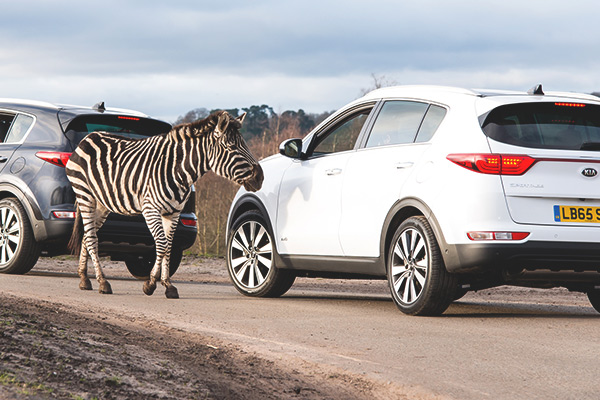 Kia Motors trains staff at a safari park